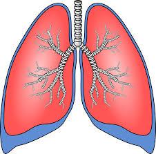 pulmones limpios